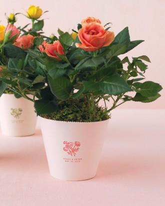 mwd105402_spr10_roses01_hd